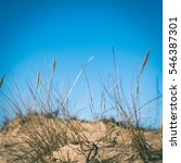 Dry Branches Of Grass On The...