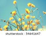 buttercup. yellow flower   Shutterstock . vector #54641647