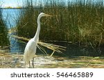 a heron on the uros reed... | Shutterstock . vector #546465889