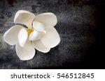 white magnolia flower on dark... | Shutterstock . vector #546512845