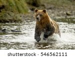 grizzly bear running in knight... | Shutterstock . vector #546562111