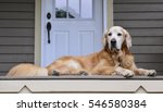 golden retriever laying down on ... | Shutterstock . vector #546580384
