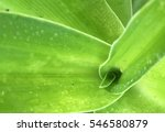 green leaf background | Shutterstock . vector #546580879