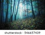 very cold dark way in the... | Shutterstock . vector #546657439