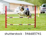 Small photo of Dog in an agility competition set up in a green grassy park