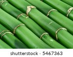 close-up of young green bamboo sticks - stock photo