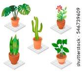 isometric vector plants for... | Shutterstock .eps vector #546739609