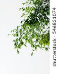 beautiful closeup green bamboo... | Shutterstock . vector #546821074