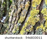 The Green And Yellow Old Moss...