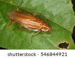 cockroaches from the equatorial ... | Shutterstock . vector #546844921