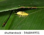cockroaches from the equatorial ...   Shutterstock . vector #546844951