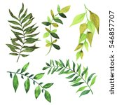 set of green branches and... | Shutterstock . vector #546857707