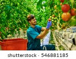 friendly farmer at work in... | Shutterstock . vector #546881185