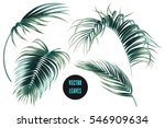 Stock vector vector palm leaves jungle leaf set isolated on white background tropical botanical illustrations 546909634