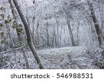 A Beautiful Woodland In Winter...