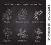 vintage collection of hand... | Shutterstock .eps vector #547002265