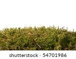 moss texture - stock photo