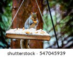 squirrel enjoying a nut during... | Shutterstock . vector #547045939
