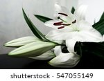 white lily on a black background | Shutterstock . vector #547055149