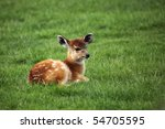 Baby Sitatunga Lying On Fresh...
