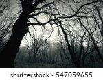 Dead Dark Winter Tree In The...