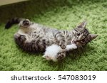 Stock photo funny kitten playing on grass carpet 547083019