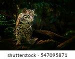 wildlife in costa rica. nice... | Shutterstock . vector #547095871