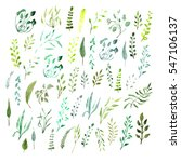 set watercolor botanical... | Shutterstock . vector #547106137