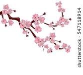 japanese cherry tree. a branch... | Shutterstock .eps vector #547118914