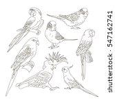 different parrots set. tropical ... | Shutterstock . vector #547162741