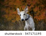 snap dog wildlife animal pets | Shutterstock . vector #547171195