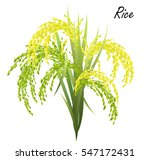 rice  oryza sativa  asian rice .... | Shutterstock .eps vector #547172431