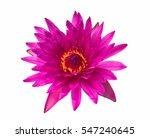 Closeup Blooming Pink Waterlil...