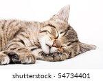 Stock photo sleeping cat 54734401