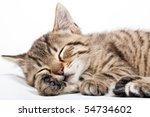 Stock photo sleeping cat 54734602