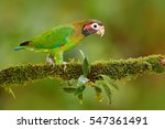 brown hooded parrot ... | Shutterstock . vector #547361491