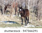 a horse in a pasture in winter | Shutterstock . vector #547366291
