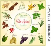 hot spices and herb condiments... | Shutterstock .eps vector #547371247