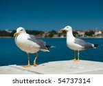 Two White Seagulls On Blue Sea...