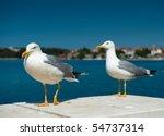 Two White Seagulls On Blue Sea...