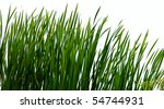 Isolated Reeds On Shore In...