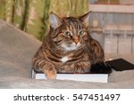 cat laying on the book | Shutterstock . vector #547451497