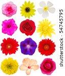 blooms decoration | Shutterstock . vector #54745795