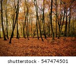 Small photo of Forest floor in autumny woodland