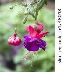 Fuchsia  Purple Pink Red