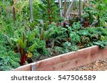 Lush  Healthy Vegetable Garden...