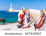 Closeup Of A White Horse...