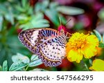 Butterflies Are The Beautiful...