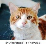 cat portrait | Shutterstock . vector #54759088
