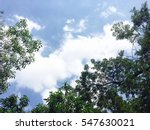 blue sky with tree leaf | Shutterstock . vector #547630021